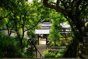 関西花の寺霊場第一番札所 あじさい寺の写真素材 [FYI03375863]