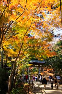 高尾山1合路の浄心門と紅葉の写真素材 [FYI03375867]
