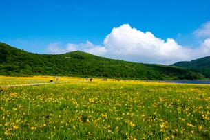 ニッコウキスゲ満開の雄国沼湿原の写真素材 [FYI03375931]