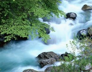 新緑と楠川の流れ  長野県の写真素材 [FYI03376045]