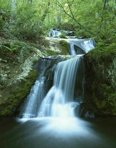 初夏の新緑の瑠璃滝 国府町 岐阜県の写真素材 [FYI03376055]