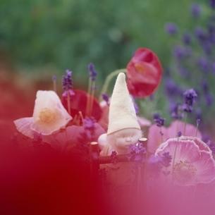 ラベンダーとポピーの花と丘の妖精人形のアップ フォトイラストの写真素材 [FYI03376113]