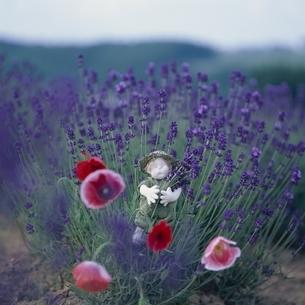 ラベンダーの花と丘の妖精人形のアップ フォトイラスト 美瑛の写真素材 [FYI03376114]