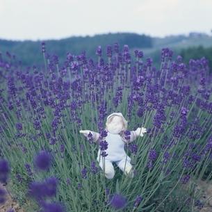 ラベンダーの花と丘の妖精人形のアップ フォトイラスト 美瑛の写真素材 [FYI03376125]