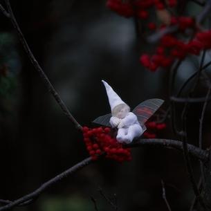 木の実と丘の妖精人形のアップ フォトイラスト 美瑛 北海道の写真素材 [FYI03376134]