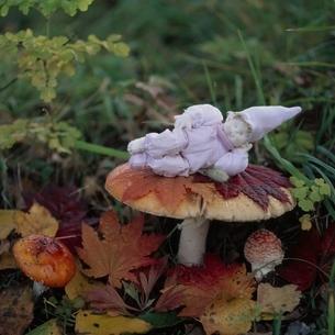 紅葉ときのこと丘の妖精人形のアップ フォトイラスト 美瑛の写真素材 [FYI03376136]