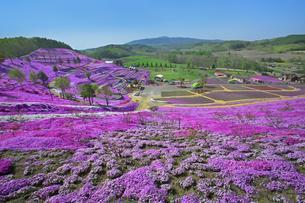 東藻琴の芝桜の写真素材 [FYI03376137]