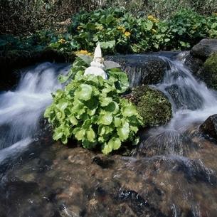 川の流れと丘の妖精人形 フォトイラスト 美瑛 北海道の写真素材 [FYI03376140]