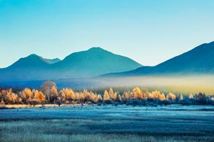 奥日光 霜の降りた小田代ヶ原とカラマツ林の写真素材 [FYI03376144]