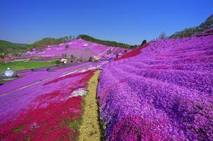 東藻琴の芝桜の写真素材 [FYI03376149]