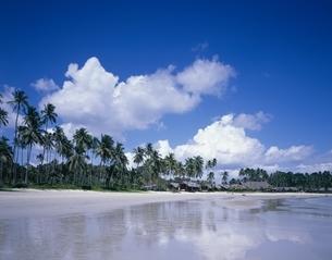 マナマナビーチクラブリゾートにて  ビンタン島 インドネシアの写真素材 [FYI03376241]