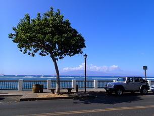ラハイナの海辺と車の写真素材 [FYI03376451]