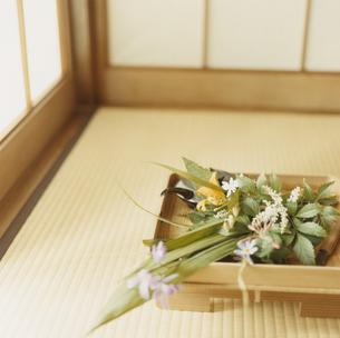 晩春の草花の写真素材 [FYI03376539]