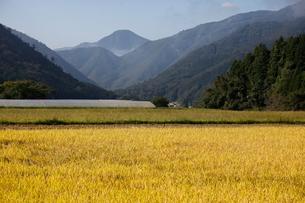 有機の里かきのきむらと盛太ヶ岳の写真素材 [FYI03376561]
