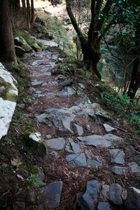 東椎屋の滝遊歩道の写真素材 [FYI03376709]
