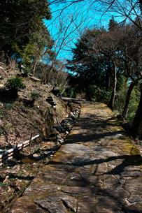 羅漢寺旧参道の写真素材 [FYI03376717]
