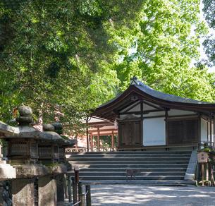 新緑の春日大社 神楽殿の写真素材 [FYI03376746]