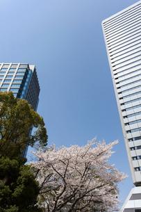 大阪ビジネスパークと桜の写真素材 [FYI03376755]