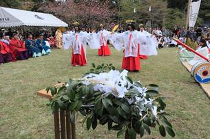 熊野本宮大社例大祭の巫女舞の写真素材 [FYI03376773]