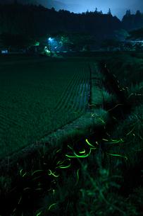 里山を流れる小川で乱舞するゲンジボタルの写真素材 [FYI03376930]