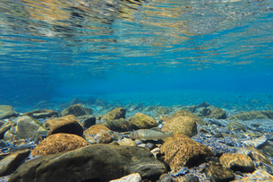 川床を泳ぐアユの写真素材 [FYI03376934]