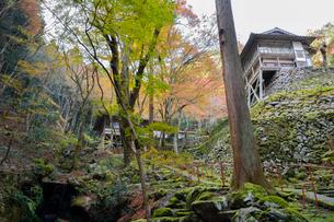 古知谷阿弥陀寺へ続く参道の写真素材 [FYI03377027]