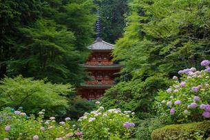 岩船寺三重塔とアジサイの写真素材 [FYI03377037]