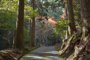 古知谷阿弥陀寺へ続く山道の写真素材 [FYI03377043]