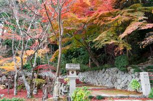 瓦屋寺石段と紅葉の写真素材 [FYI03377078]