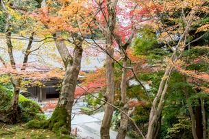 瓦屋寺の庫裏と紅葉の写真素材 [FYI03377080]