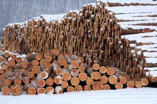 冬の材木の写真素材 [FYI03377296]