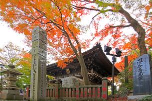 高尾山薬王院の四天王門と紅葉の写真素材 [FYI03377425]