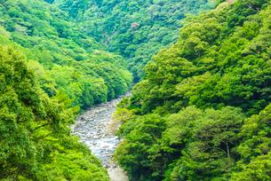 綾町の照葉樹林の写真素材 [FYI03377605]