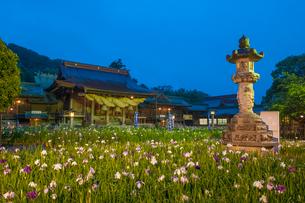 宮地嶽神社の菖蒲の写真素材 [FYI03377611]