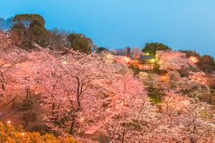 菊池公園の夜桜の写真素材 [FYI03377620]
