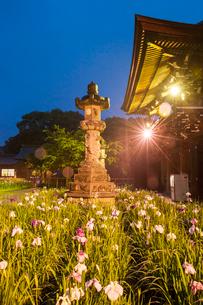 宮地嶽神社の菖蒲の写真素材 [FYI03377625]