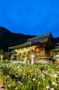 宮地嶽神社の菖蒲の写真素材 [FYI03377635]