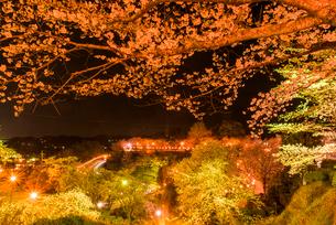 菊池公園の夜桜の写真素材 [FYI03377637]