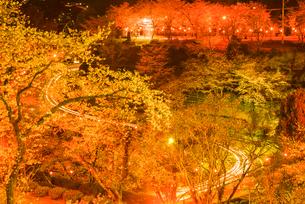菊池公園の夜桜の写真素材 [FYI03377653]