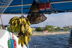 ヨット生活のバナナの写真素材 [FYI03377654]
