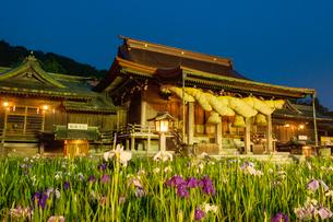 宮地嶽神社の菖蒲の写真素材 [FYI03377657]