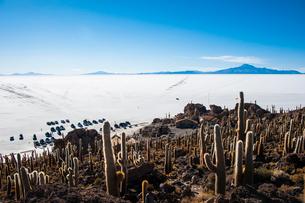 ウユニ塩湖のサボテン島 インカワシの写真素材 [FYI03377801]