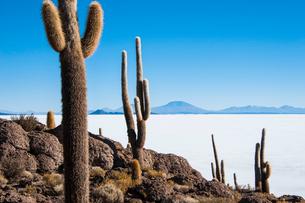 ウユニ塩湖のサボテン島 インカワシの写真素材 [FYI03377809]