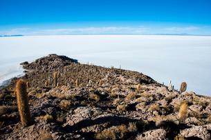ウユニ塩湖のサボテン島 インカワシの写真素材 [FYI03377815]