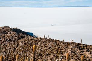 ウユニ塩湖のサボテン島 インカワシの写真素材 [FYI03377833]