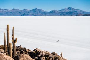 ウユニ塩湖のサボテン島 インカワシの写真素材 [FYI03377842]
