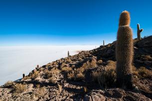 ウユニ塩湖のサボテン島 インカワシの写真素材 [FYI03377844]