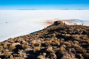 ウユニ塩湖のサボテン島 インカワシの写真素材 [FYI03377845]