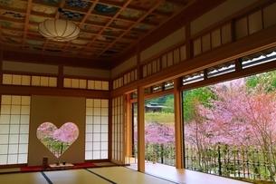 京都 正寿院の桜の写真素材 [FYI03378016]