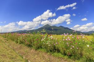 コスモスの花咲く磐梯山の写真素材 [FYI03378119]